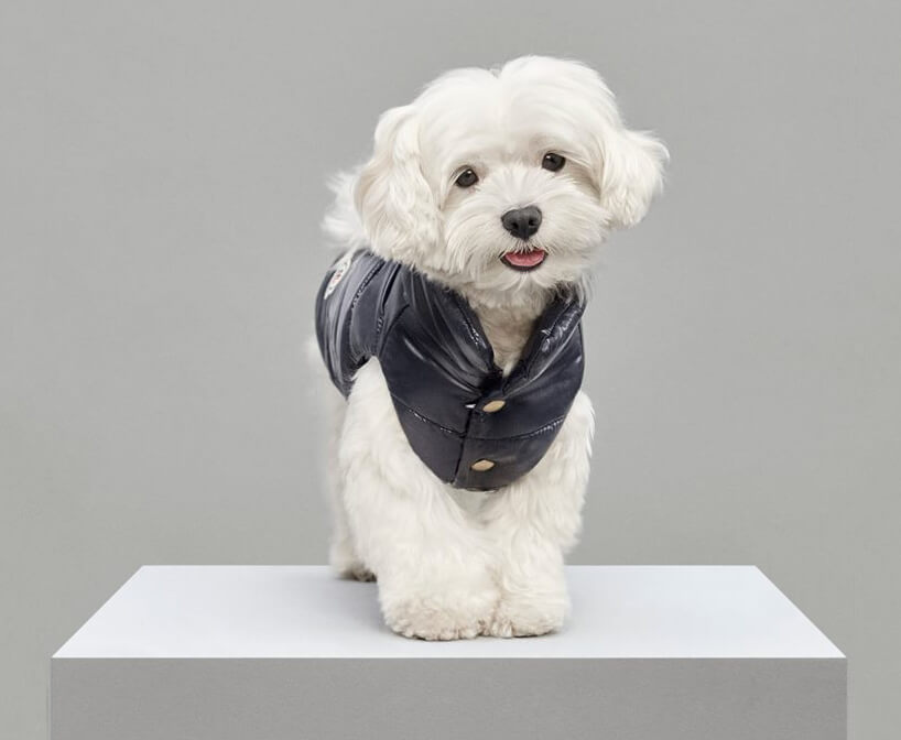 Luxury Puffer Jackets for Dogs by Moncler 2 (1)
