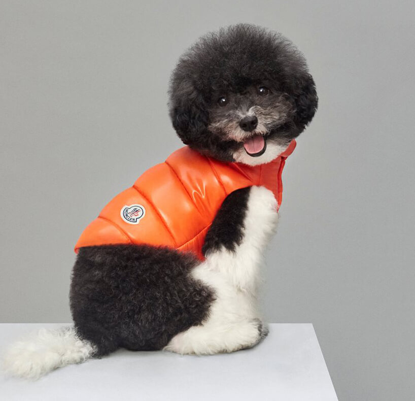 Luxury Puffer Jackets for Dogs by Moncler 3 (1)