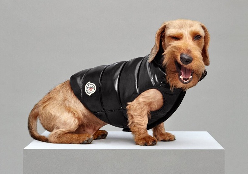 Luxury Puffer Jackets for Dogs by Moncler 4 (1)