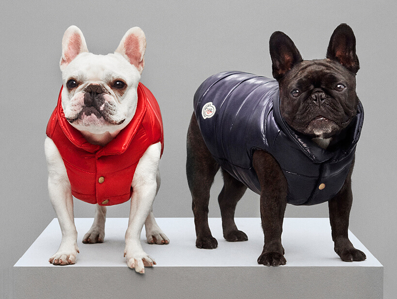 Luxury Puffer Jackets for Dogs by Moncler 5 (1)