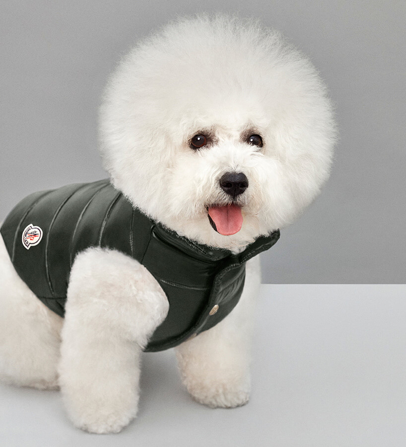 Luxury Puffer Jackets for Dogs by Moncler 6 (1)