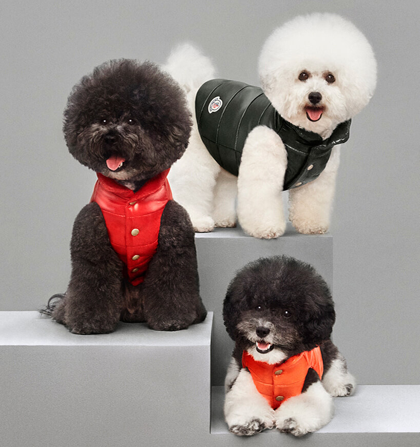 Luxury Puffer Jackets for Dogs by Moncler 7 (1)