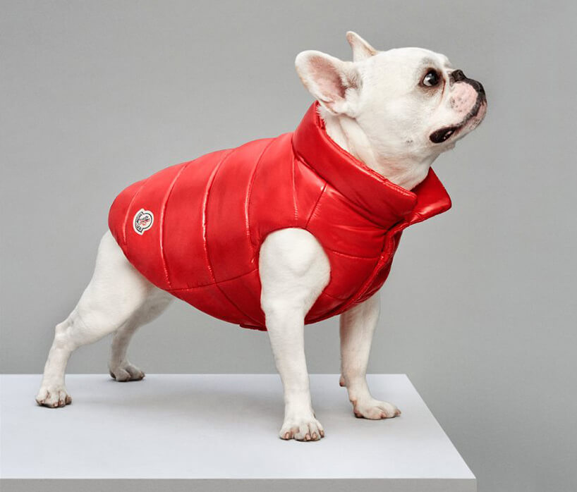 Luxury Puffer Jackets for Dogs by Moncler 8 (1)