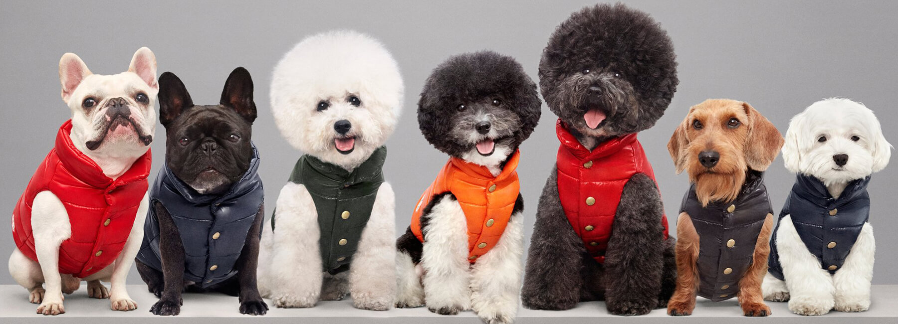 Luxury Puffer Jackets for Dogs by Moncler 9 (1)
