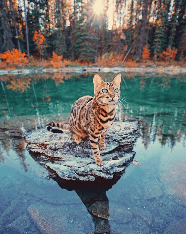 Suki the cat 1 (1)