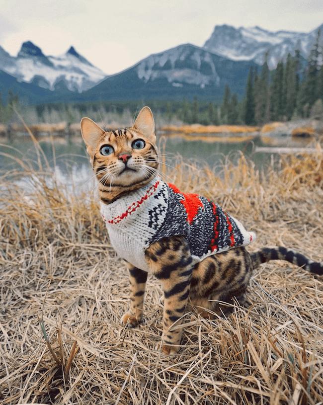 Suki the kitten 12 (1)