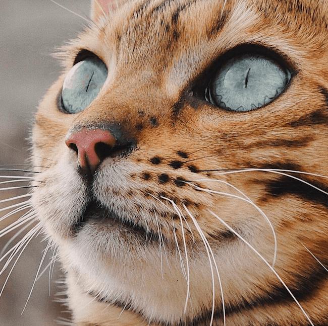 Suki the kitten 13 (1)