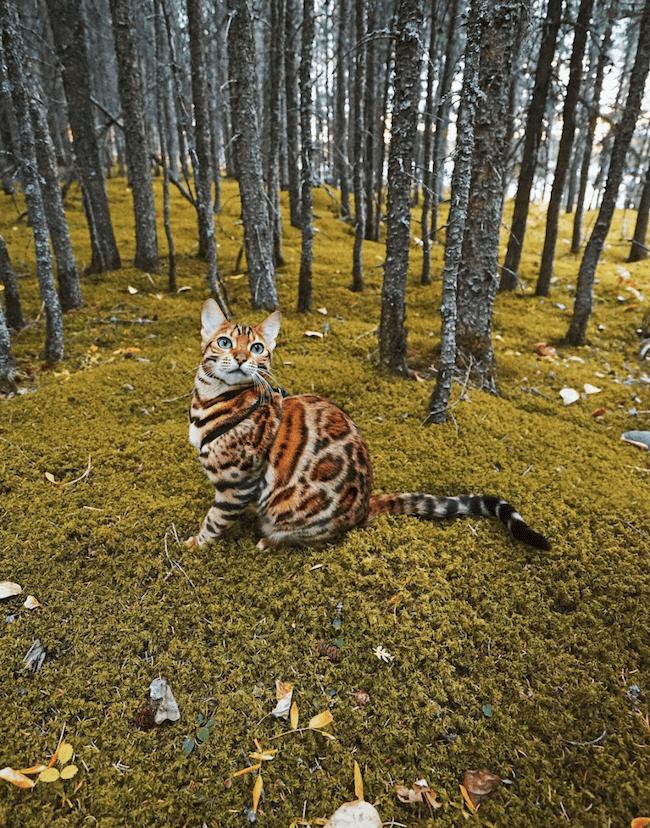Suki the kitten 14 (1)