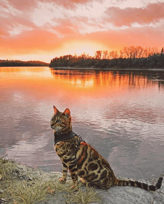 Suki the cat 3 (1)