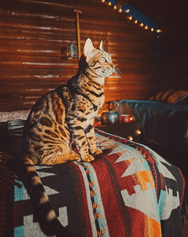 Suki the kitten 5 (1)