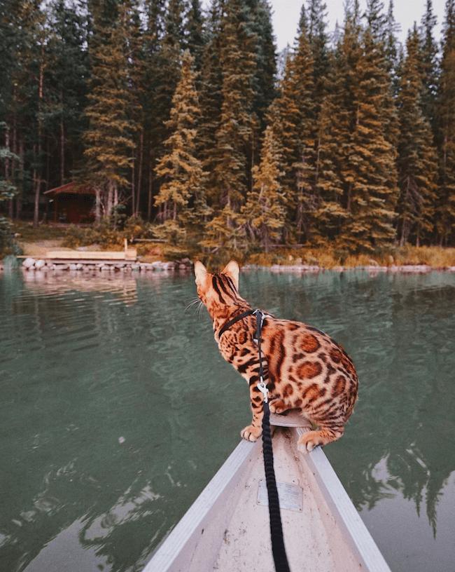 Suki the kitten 9 (1)