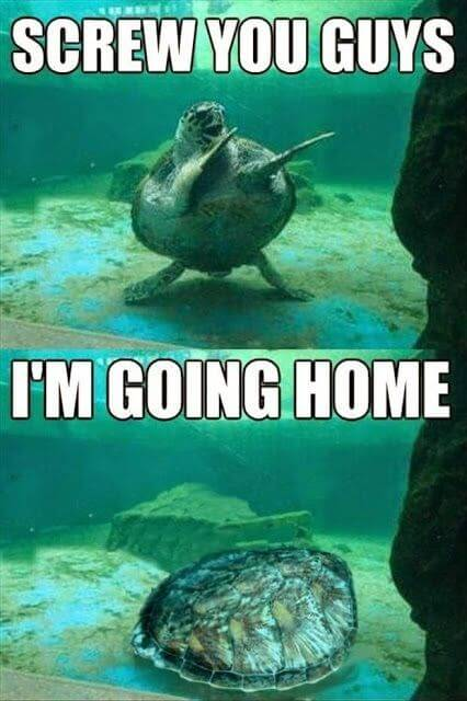 Turtle Memes 1 1 29 hilarious turtle memes that are so funny they're actually dangerous