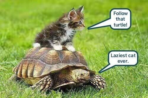 Turtle puns 11 (1)