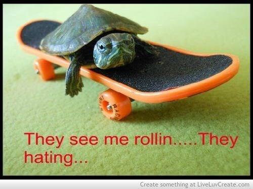 Turtle puns 12 (1)