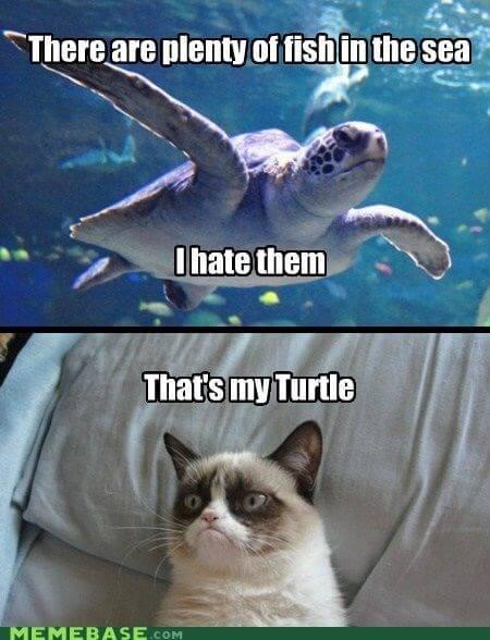 reptile Memes 13 (1)
