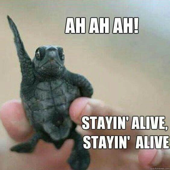 reptile Memes 14 (1)
