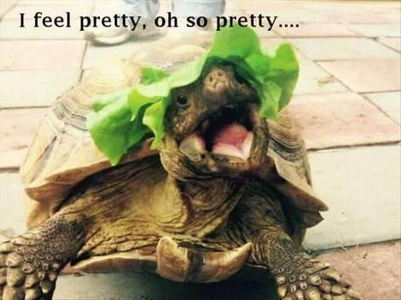 reptile Memes 15 (1)