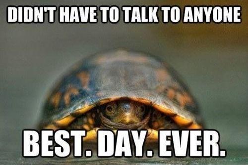 reptile Memes 17 (1)
