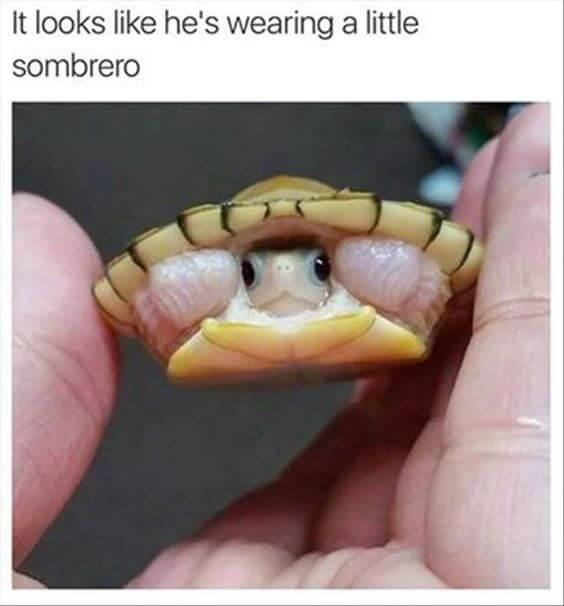 Turtle Memes 2 (1)