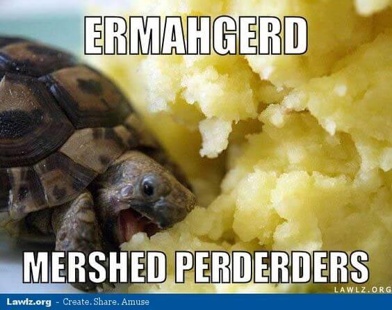 tortoise Memes 20 (1)
