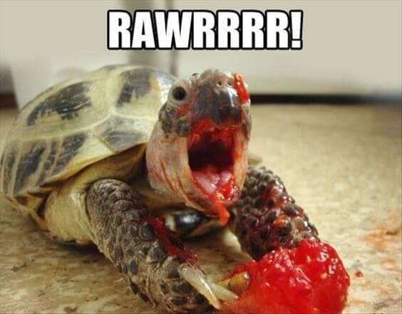 tortoise Memes 21 (1)