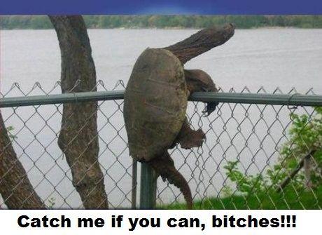 tortoise Memes 22 (1)