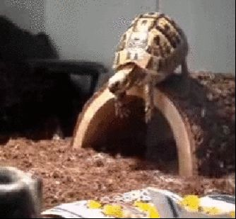 marine tortoise Memes 26 (1)