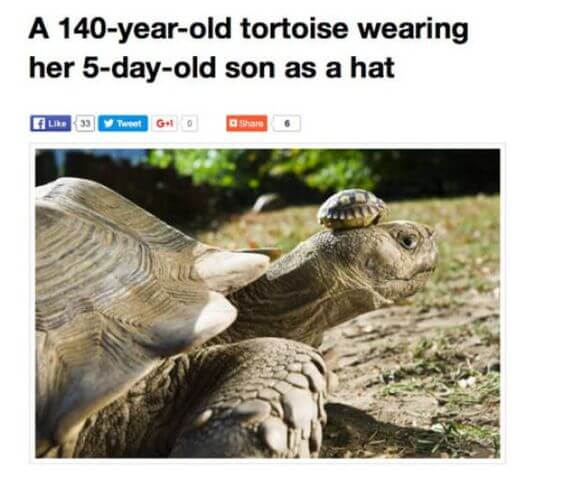 marine tortoise Memes 28 (1)