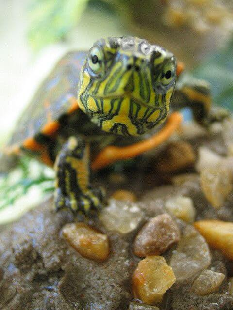 Turtle Memes 29 (1)