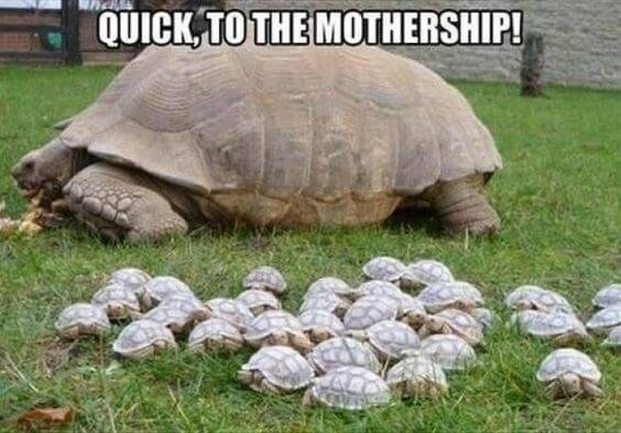 Turtle images 3 (1)