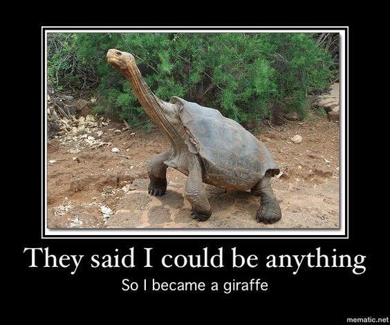 Turtle puns 8 (1)