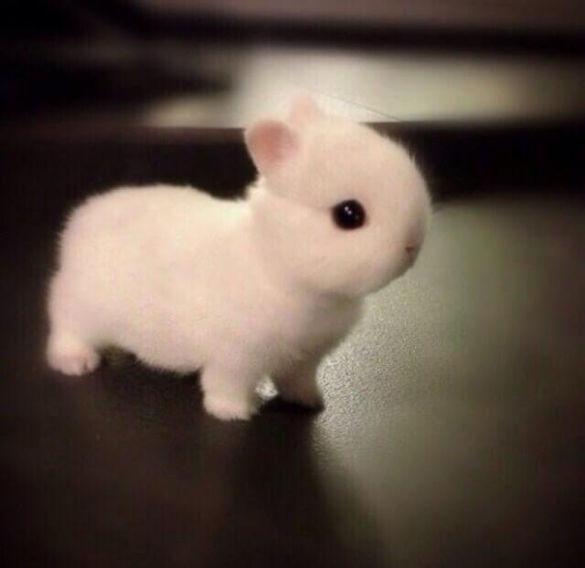 adorable animals 1 (1)