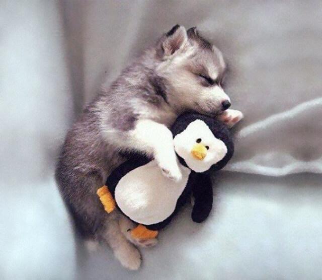 adorable pets 10 (1)