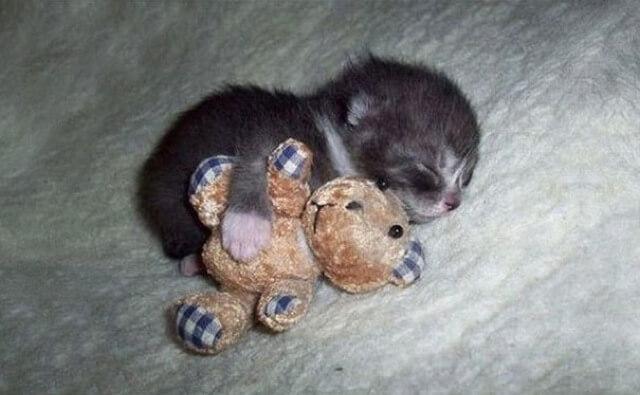 adorable pets 11 (1)