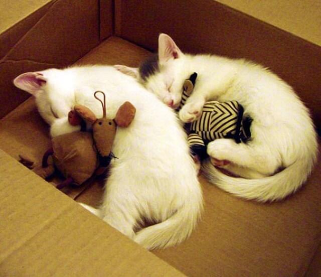 adorable pets 14 (1)