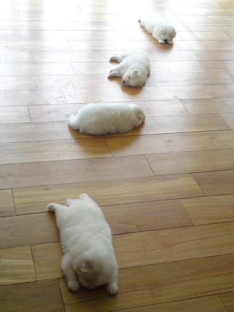 adorable pets 15 (1)