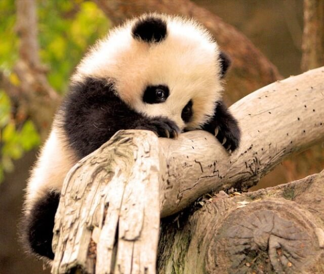 adorable animal pics 17 (1)