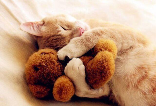 adorable animal pics 19 (1)