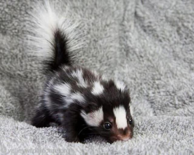 adorable tiny pets 27 (1)