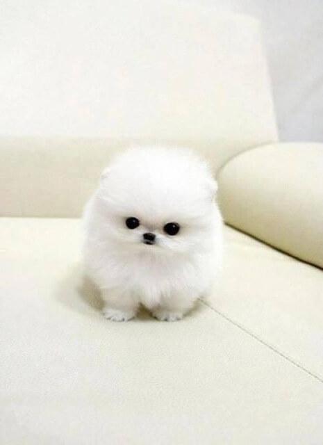 adorable animals 4 (1)