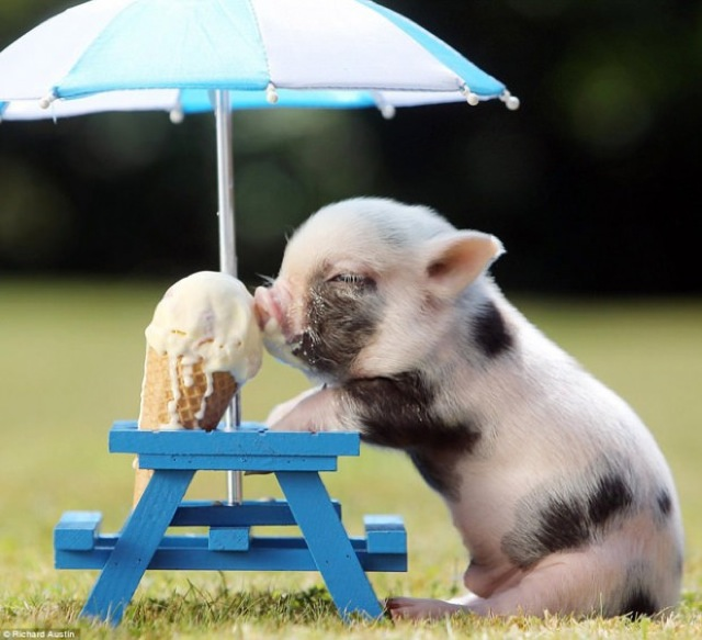 adorable animals12