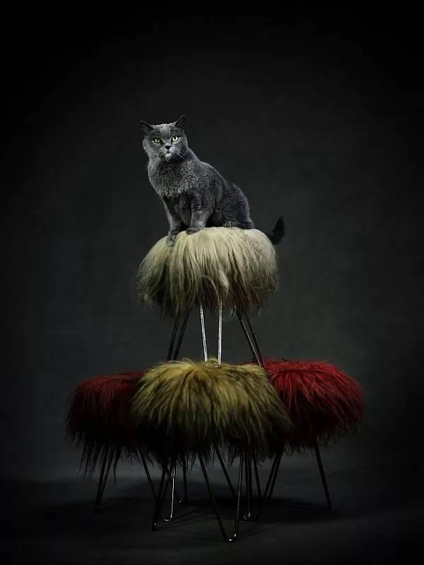 amazing animal photography vincent lagrange 10 (1)