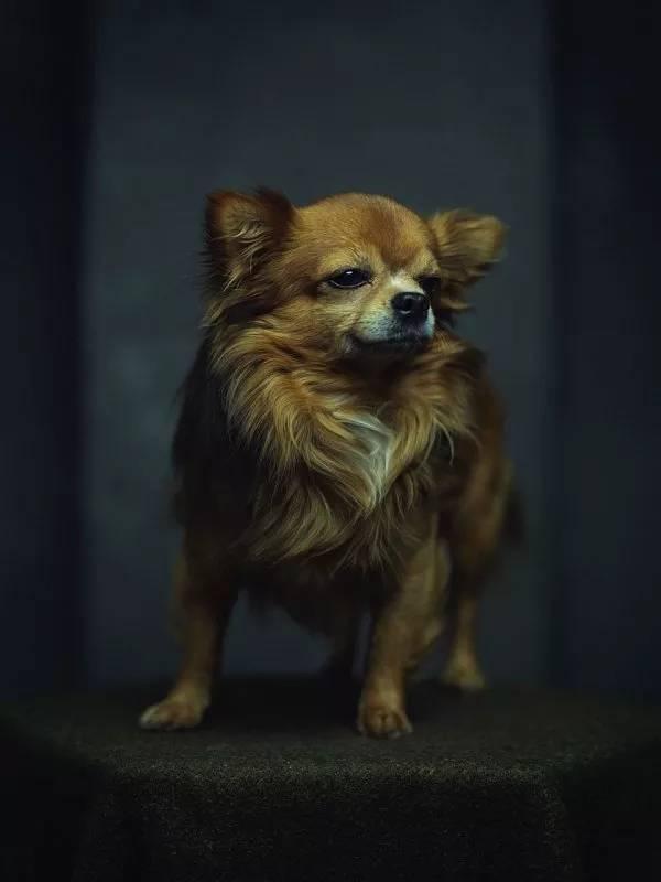 amazing animal photography vincent lagrange 11 (1)