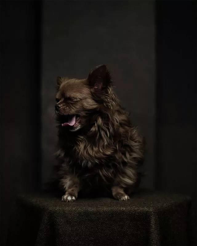amazing animal photography vincent lagrange 12 (1)