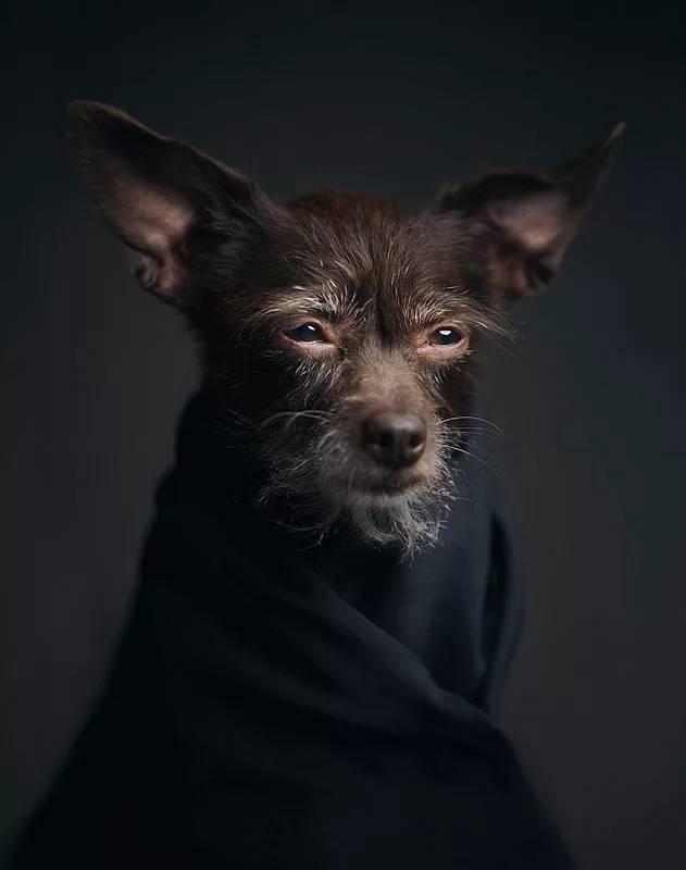 amazing animal photography vincent lagrange 8 (1)