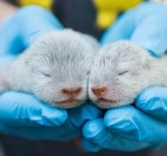 baby otters santa barbara zoo feat (1)