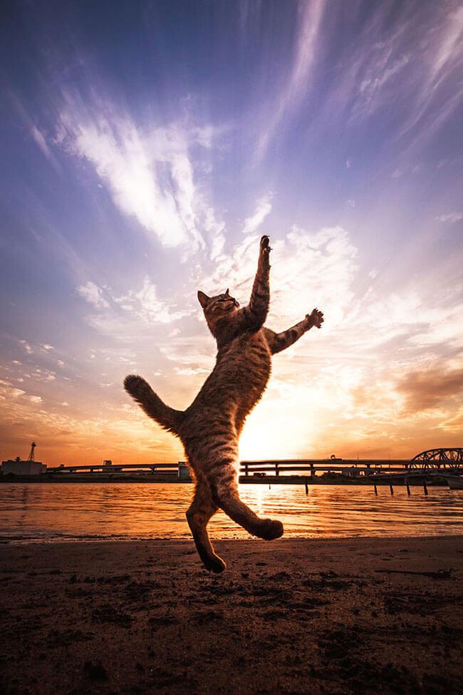 beautiful cat pictures 1 (1)