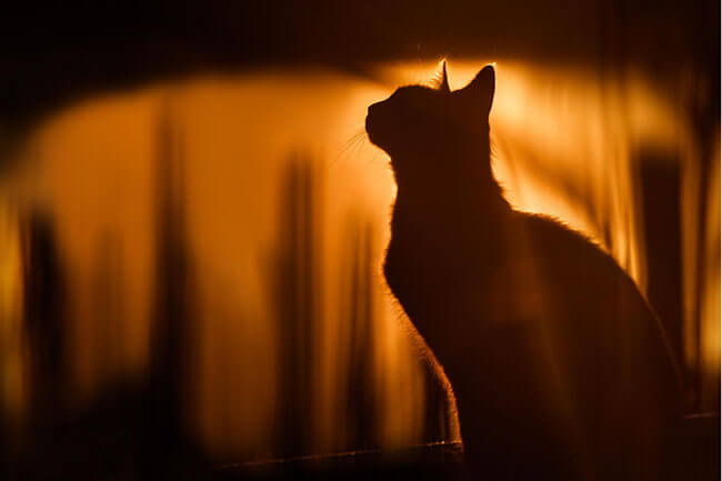 stunning cat pictures 10 (1)