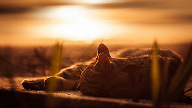 stunning cat pictures 11 (1)