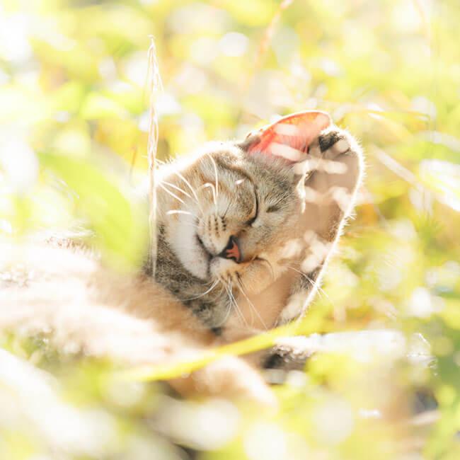 beautiful cat photos 13 (1)